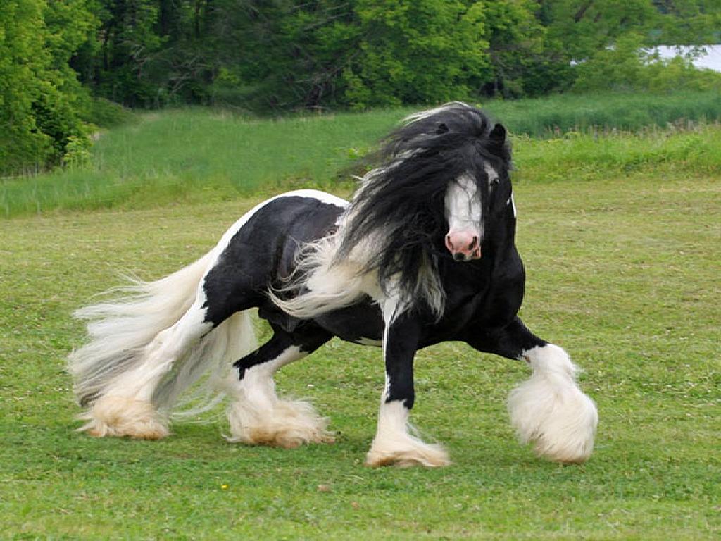 اجمل خيول العالم  (1)