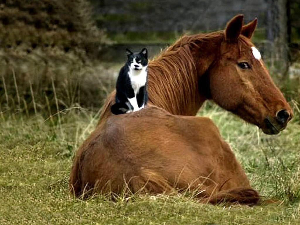 اجمل خيول العالم  (2)