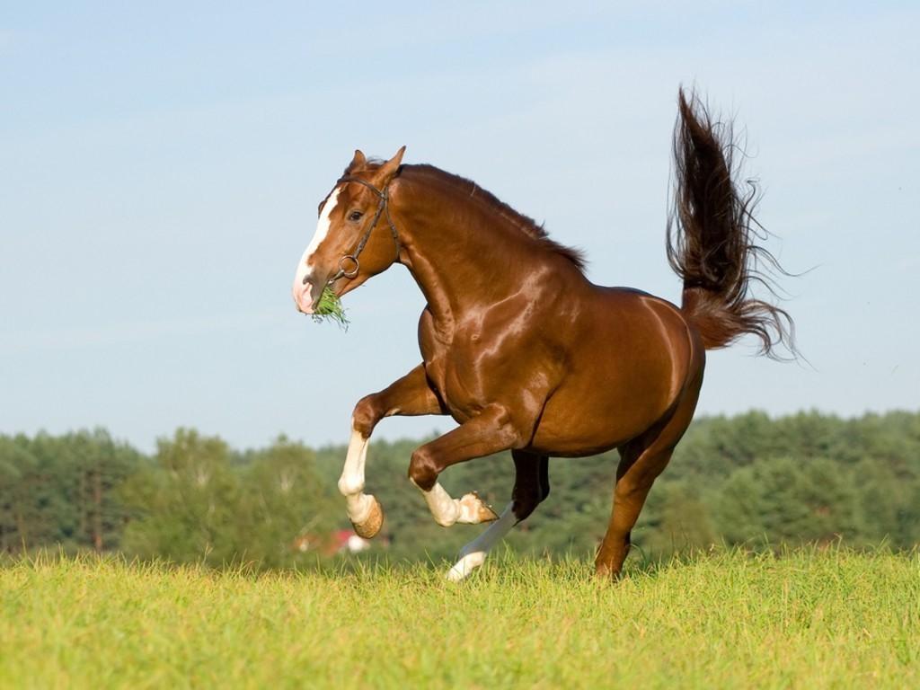 اجمل خيول العالم  (3)