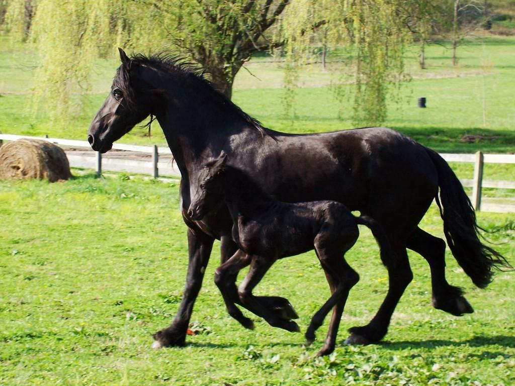 اجمل خيول في العالم (1)