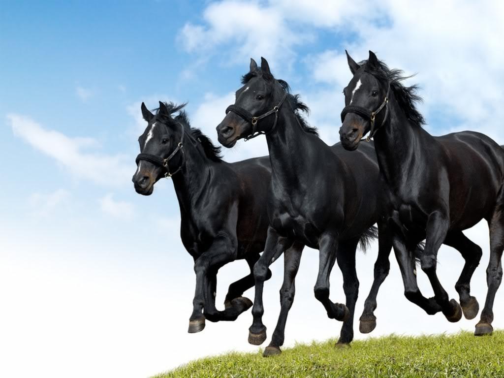 اجمل صور خيول (1)