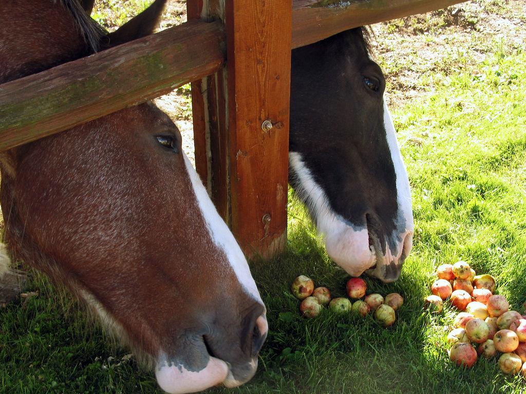 اجمل صور خيول (2)