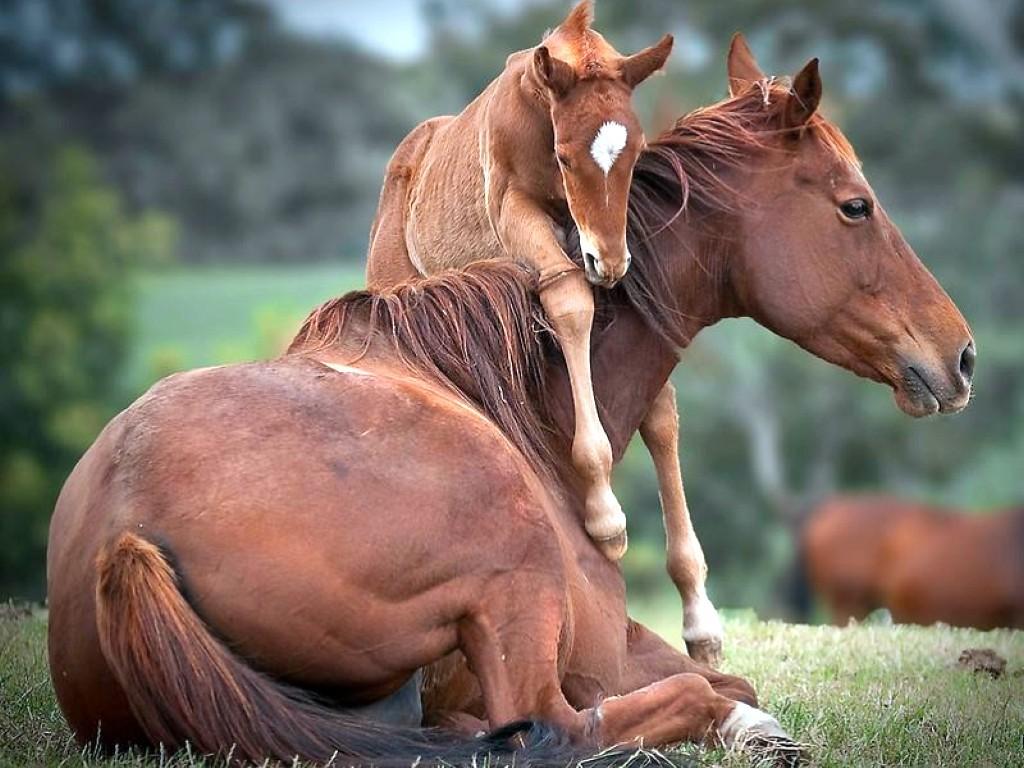 اجمل صور خيول (4)