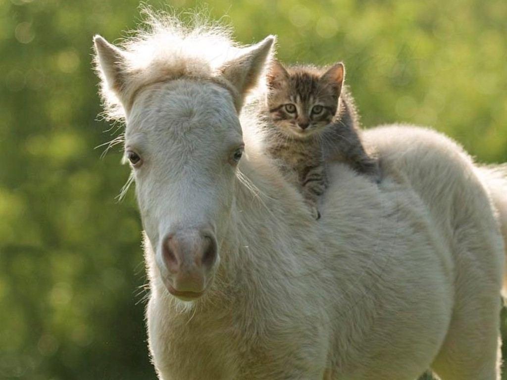 اجمل صور خيول (5)