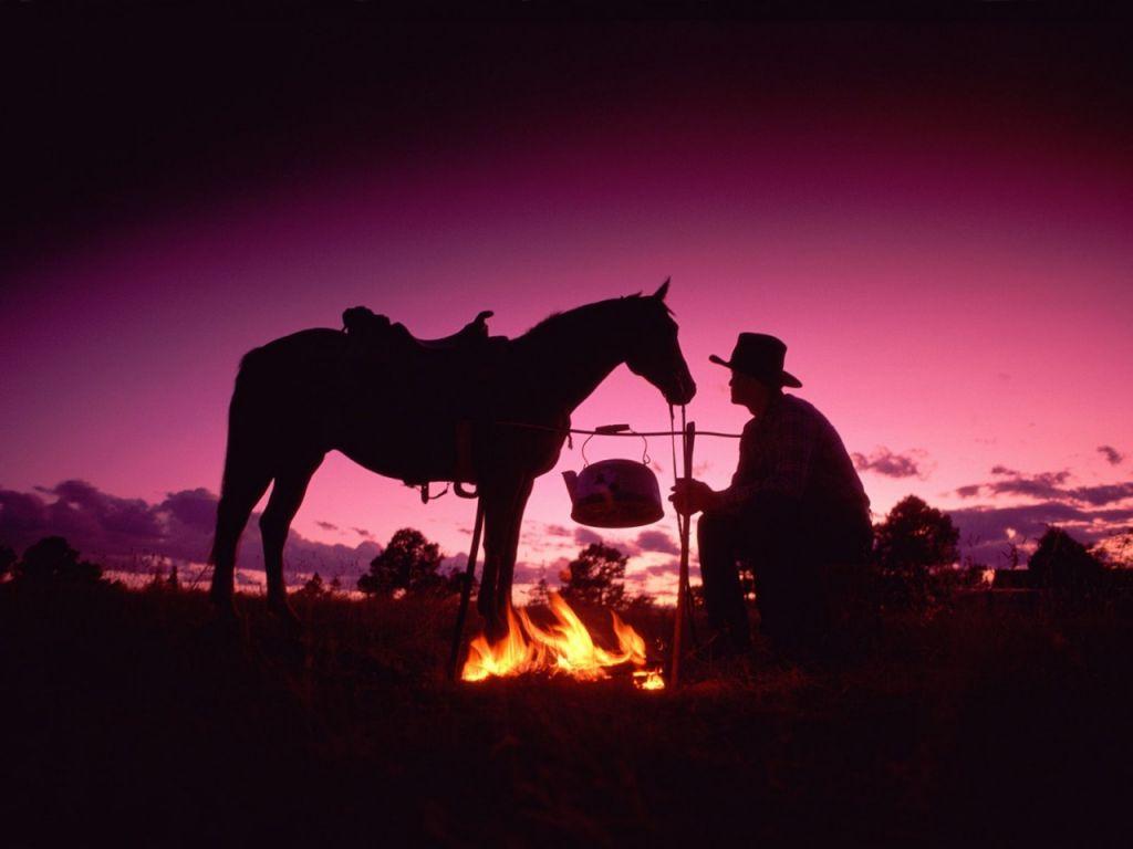 اجمل صور خيول (6)