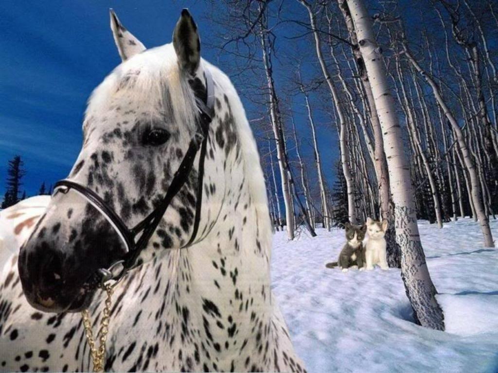 اجمل صور خيول (8)