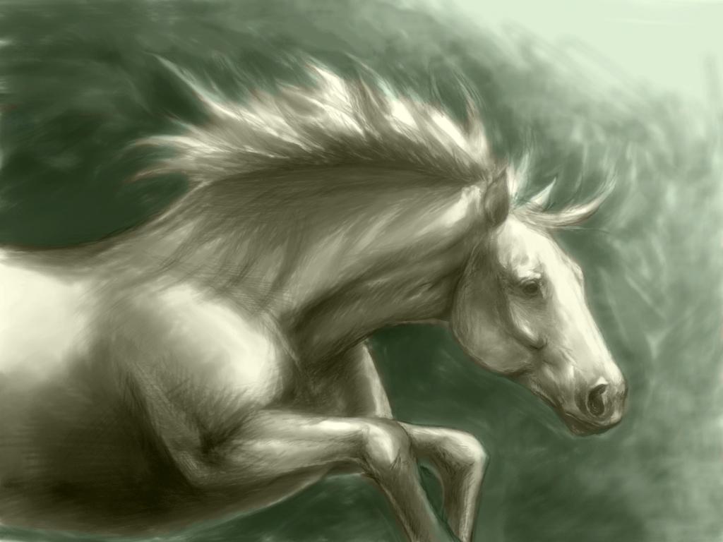 خلفيات الخيول HD (1)