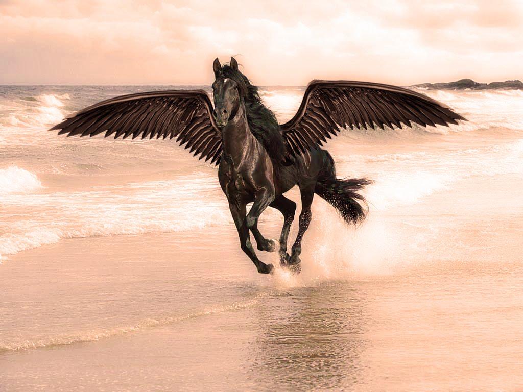 خلفيات الخيول HD (2)