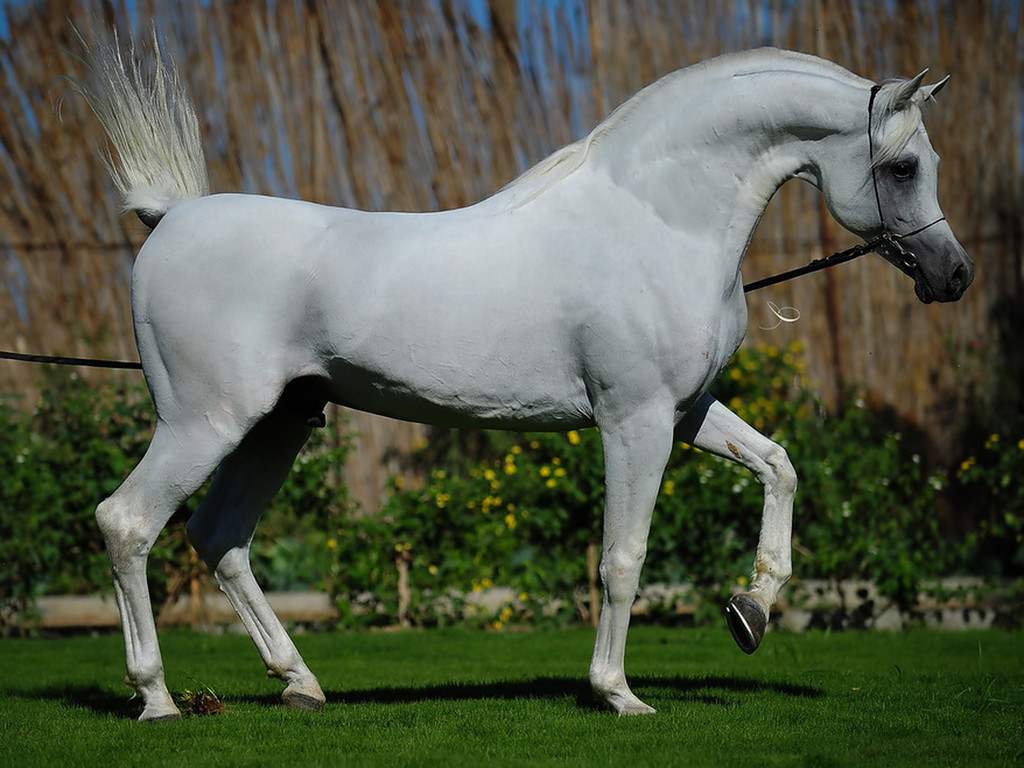 خيول جميلة بالصور (1)