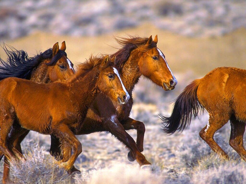 خيول جميلة بالصور (2)