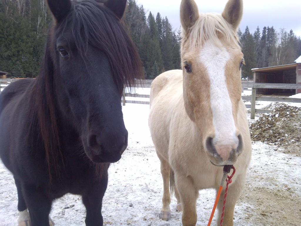 خيول جميلة بالصور (3)