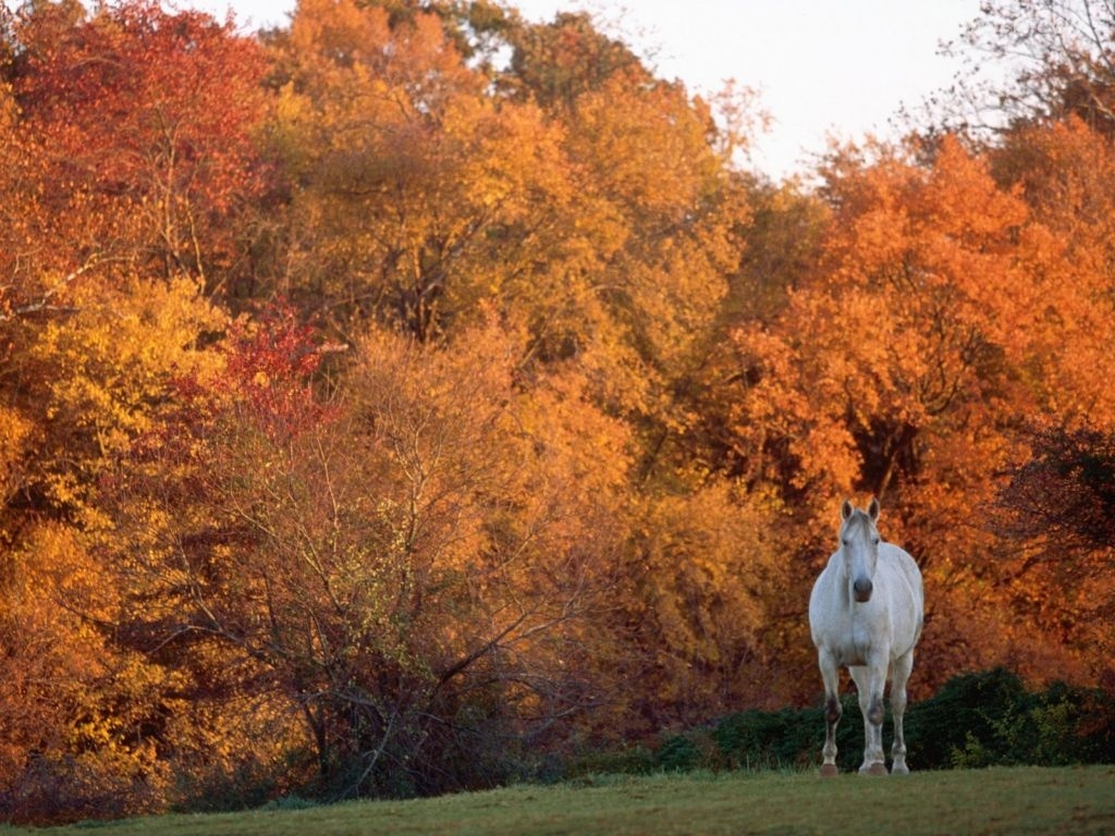 خيول عربية اصيلة (1)