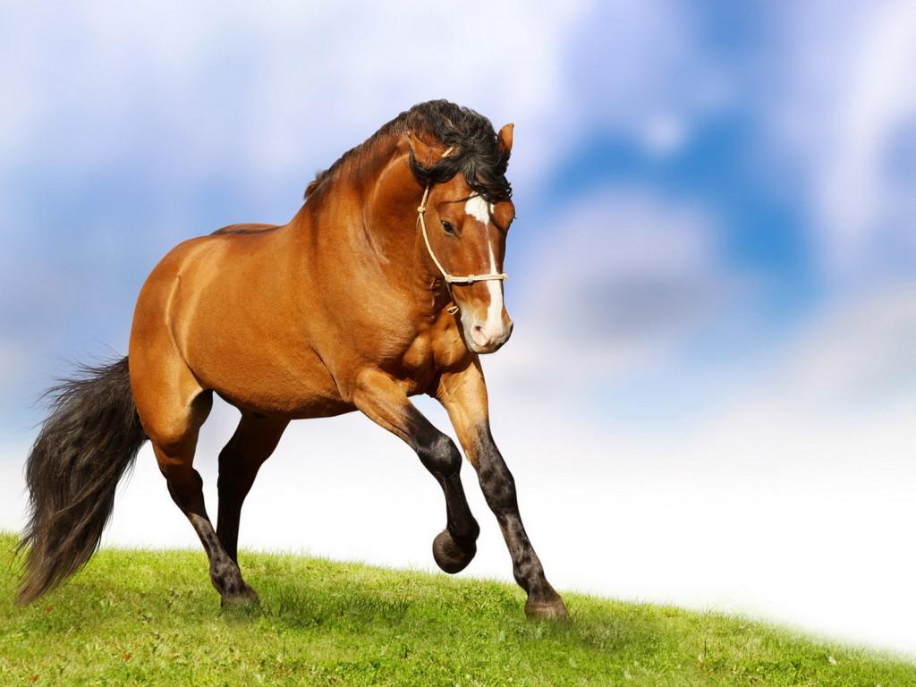 خيول (1)