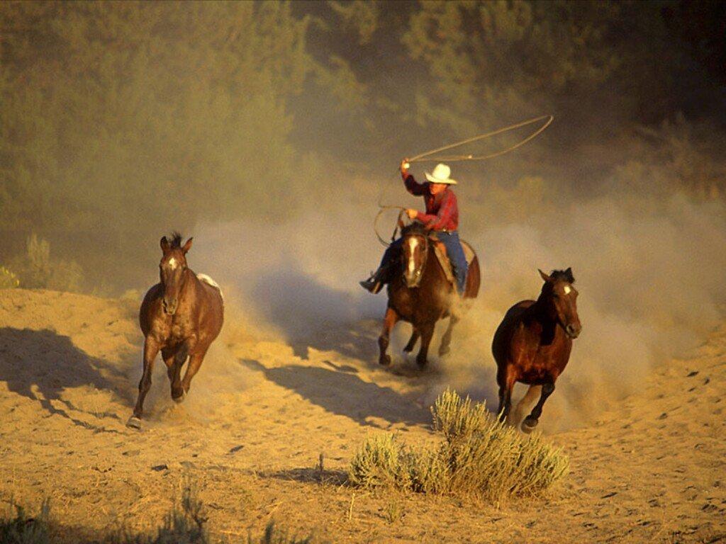 خيول (3)