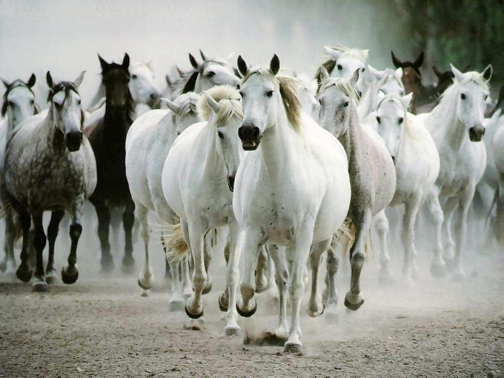 خيول (4)
