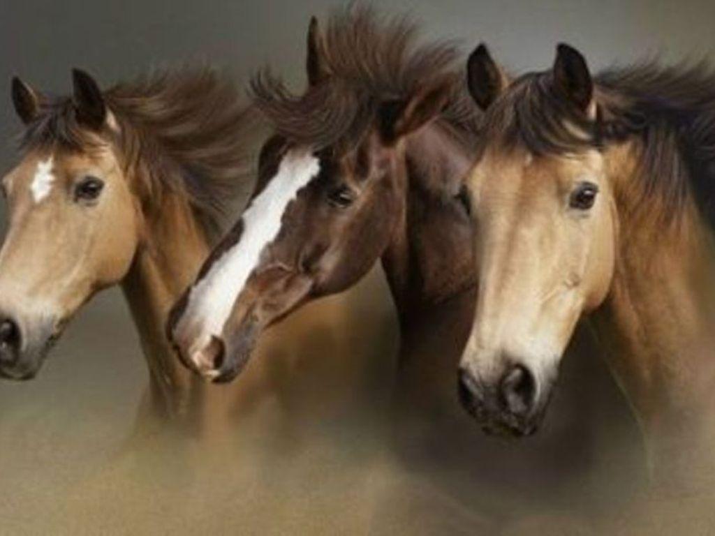 صور خيول  (5)