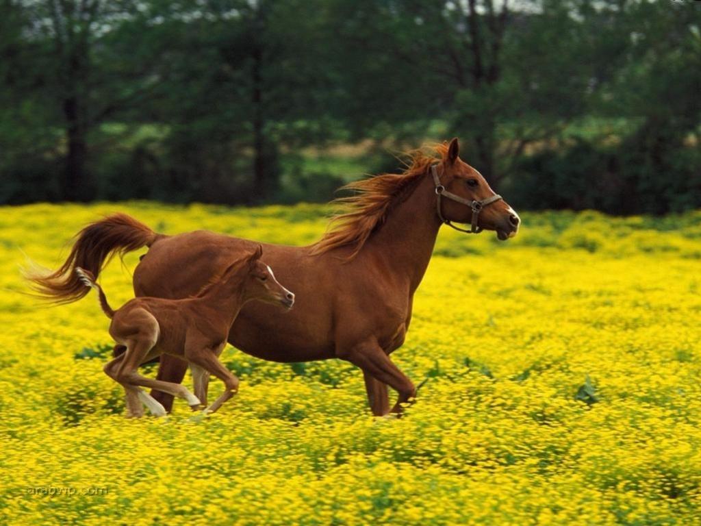 احصنة (3)