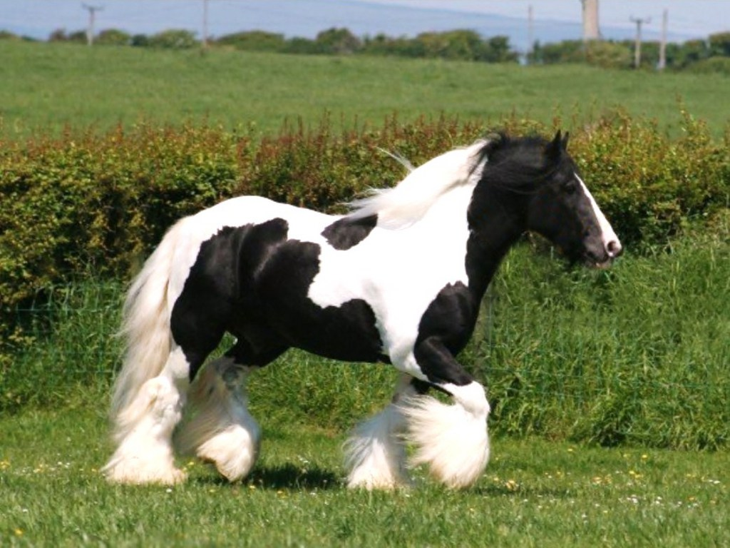 احصنة (5)