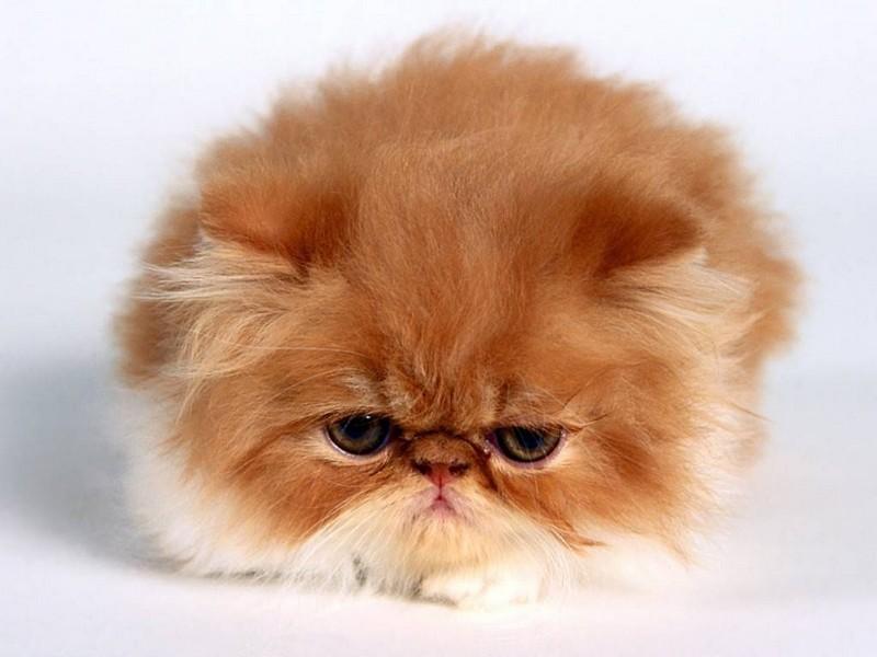 احلي قطط (2)