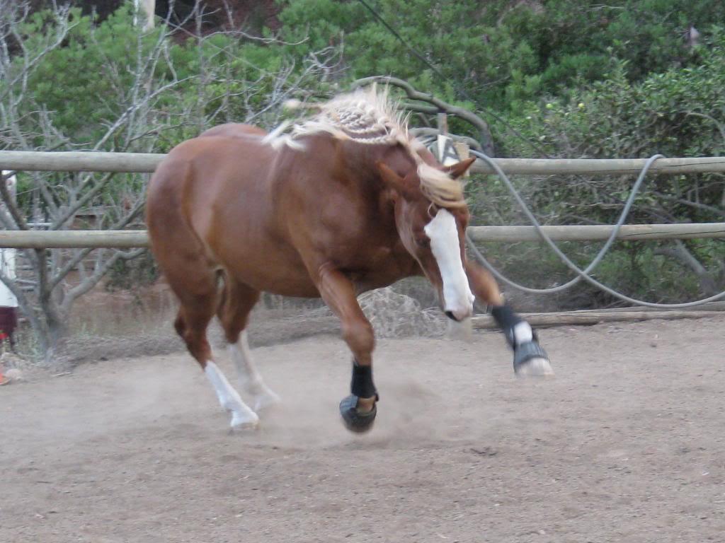 خيول عربية واحصنة عربية (4)