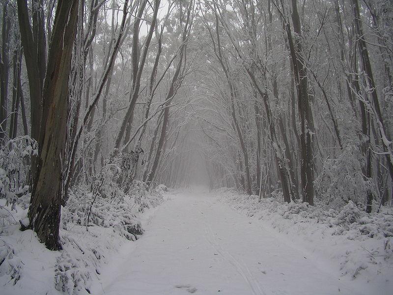 رمزيات وخلفيات عن الشتاء (3)