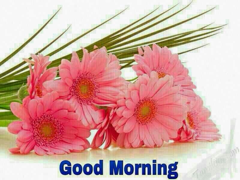 صباح الخير good morning (1)