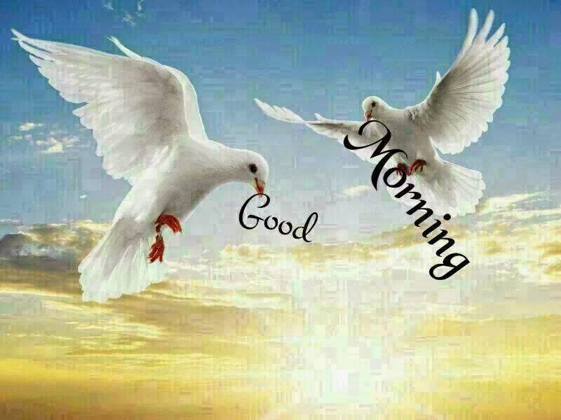 صباح الخير good morning (3)