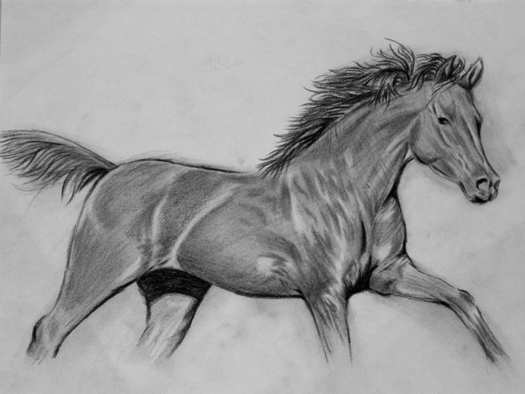 صور احصنة (2)