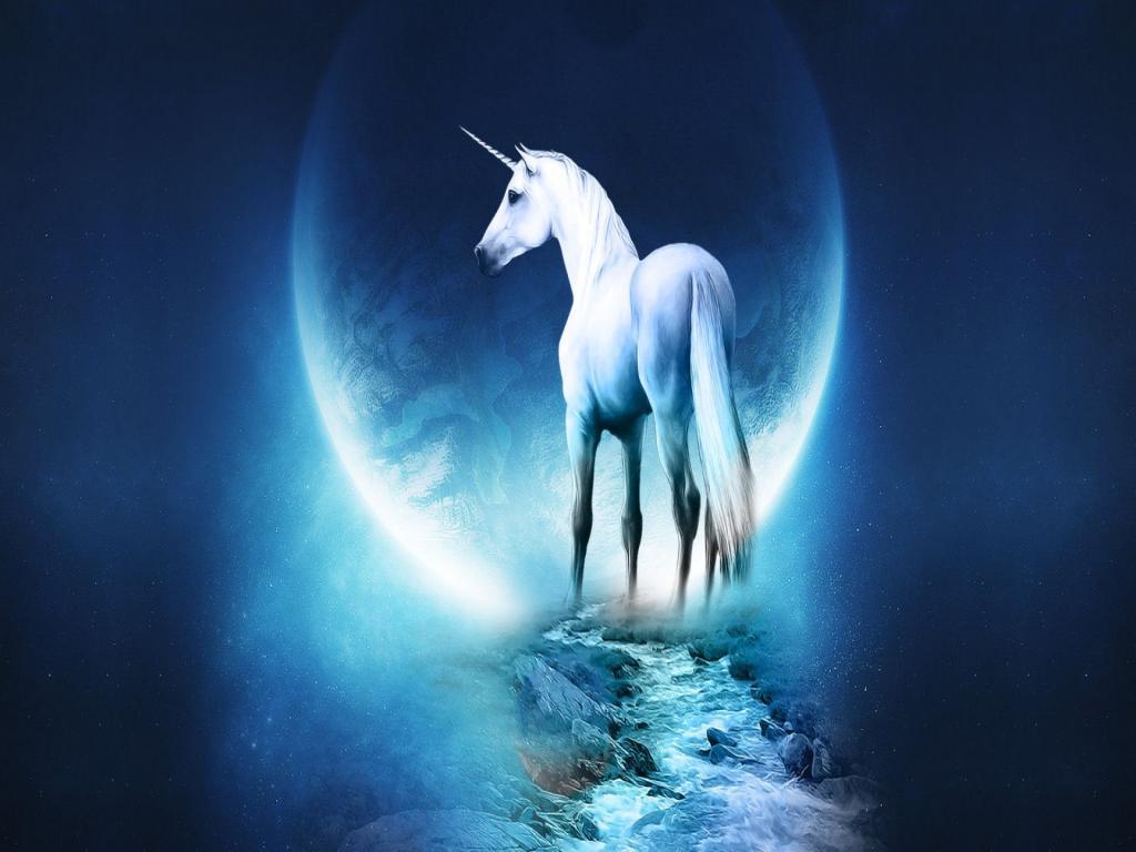 صور احصنة (5)