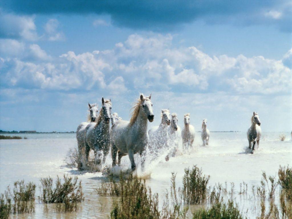 صور حصان عربي (2)