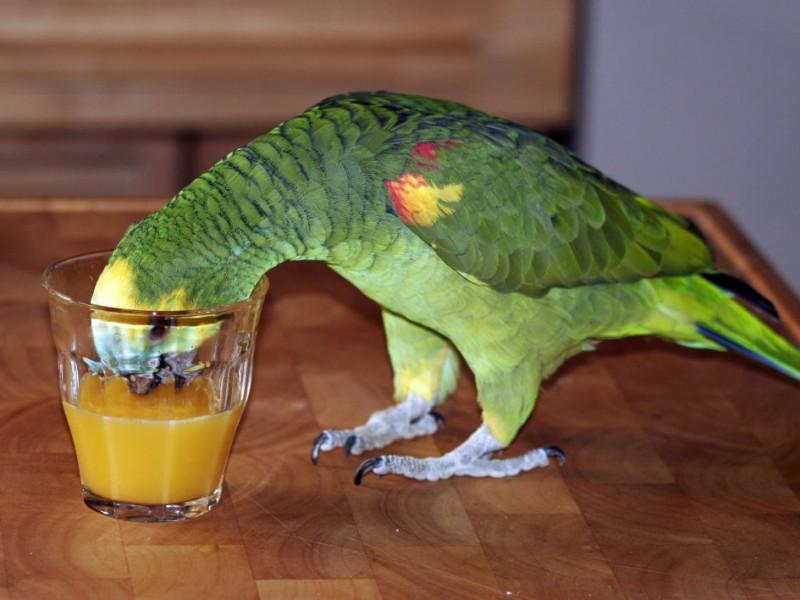 صور طيور ببغاء (2)