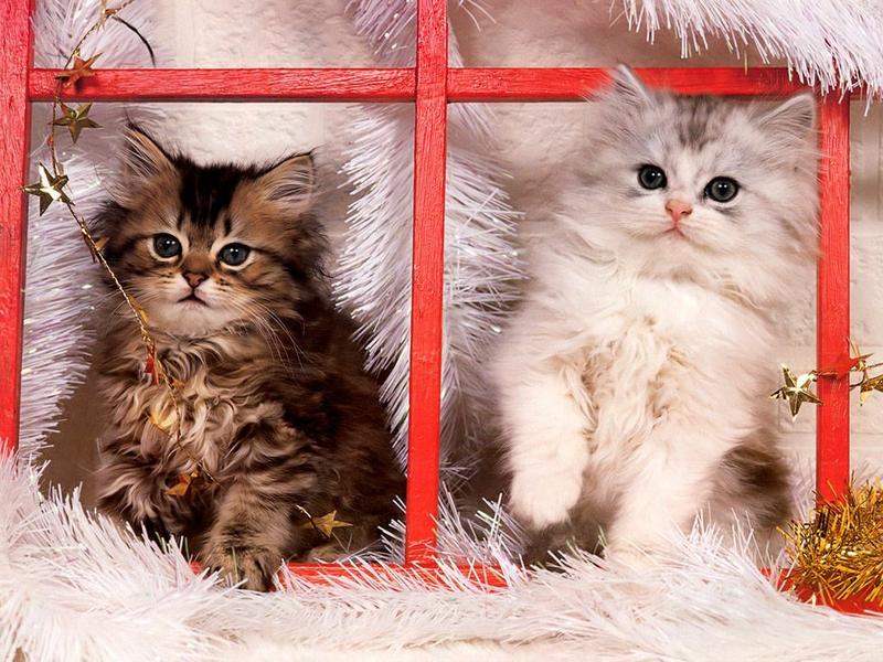 صور قطط وبسس (2)