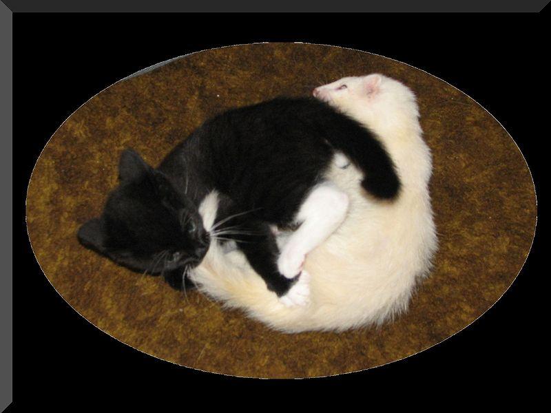 صور قطط وبسس (3)