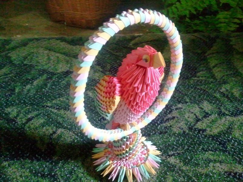 طيور ببغاء (1)