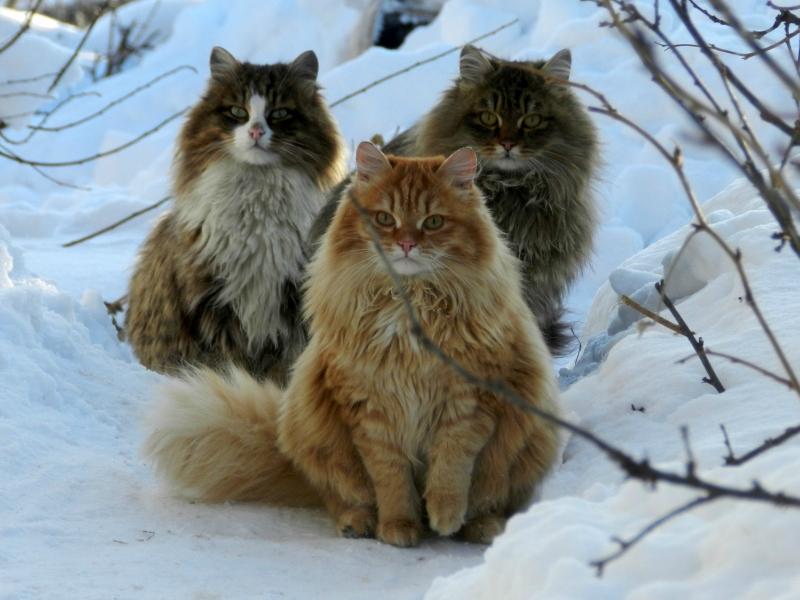 قطط جميلة (1)