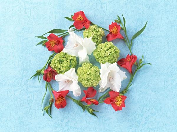 اجمل ازهار الربيع (2)