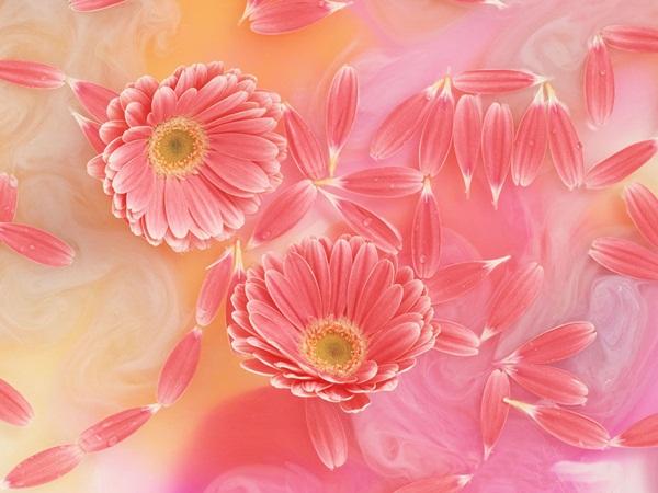 اجمل ازهار الربيع (3)