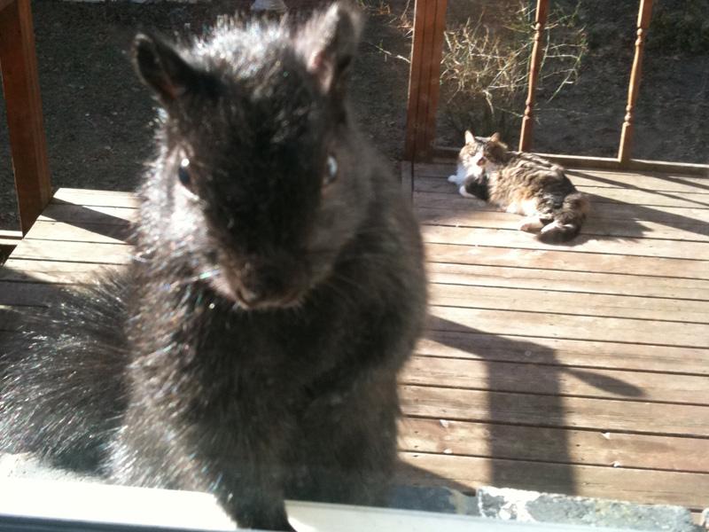 احلي صور قطط (1)