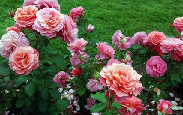 ازهار وورود جميلة (2)