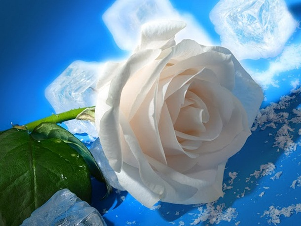 ازهار وورود جميلة (3)