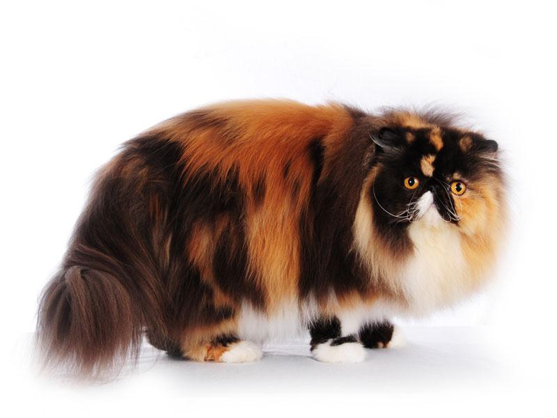 خلفيات قطط (1)