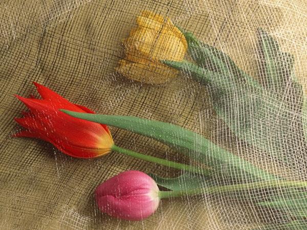 زهور باللون الاحمر (3)