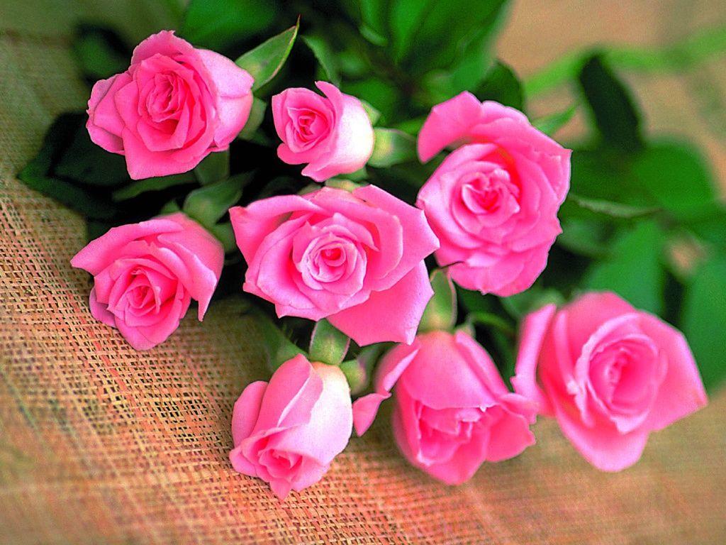 زهور حب ورومانسية (1)