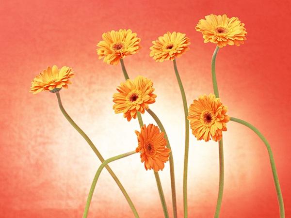 زهور حب (1)