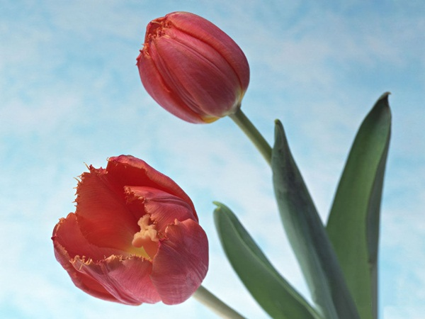 زهور حب (3)