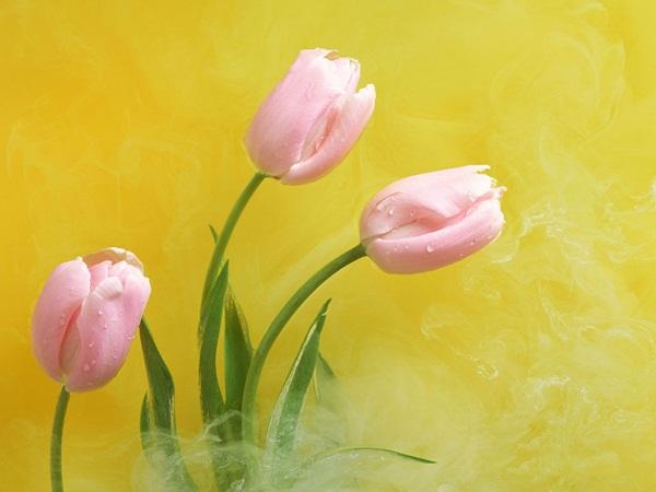 زهور حب (4)