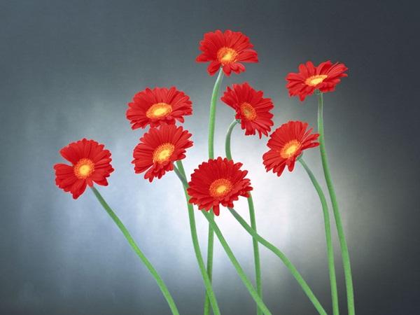 زهور حب (5)