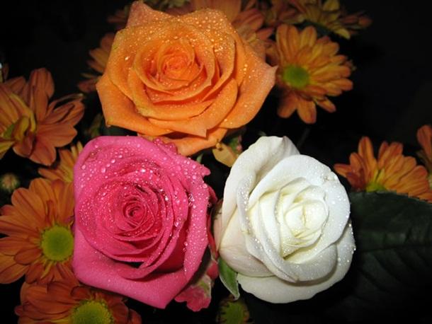 زهور روز وبمبي (1)
