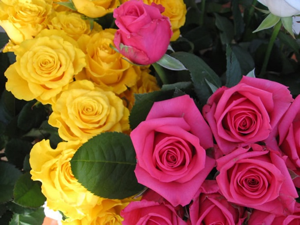 زهور روز وبمبي (2)