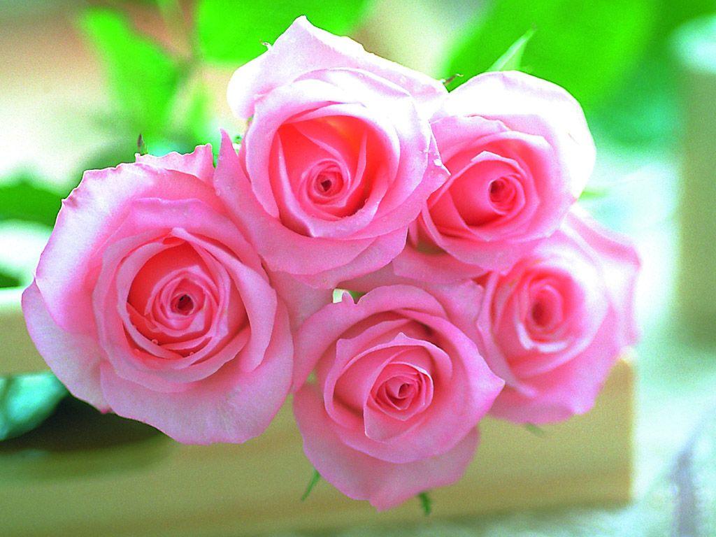 زهور روز وبمبي (6)